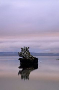 nature-log queen charlotte bay.jpg