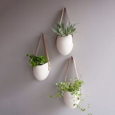 Porcelain Planters Set Of 3....use for planting fresh herbs such as basil...