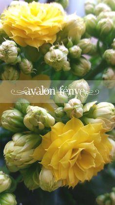 Sárga Virág Yellow flower