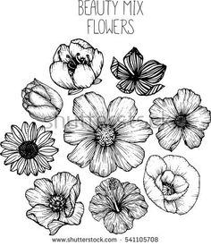 mix flowers drawing vector illustration and clip-art. cherry blossom,cosmos,poppy,hibiscus,tulip,sunflower,wild rose.