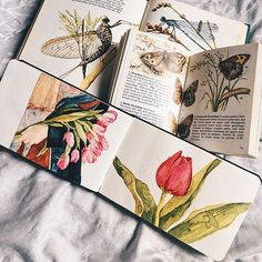 A spread from the pocket Moleskine, quickly done during a few stolen bits of time. The panel with the armful of tulips was brazenly based on @colour_andlight, pixie extraordinaire. Also: Two books on moths and butterflies the Universe deigned to send my way.