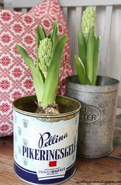 Sprucing up your place this spring? (A common tradition here in Northern Maine!) Reuse your paint cans to make really fun, unique planters for spring blooms. Paint Cans, Indoor Plants, Pot Plants, Container Gardening, Gardening Tips, Reuse, Planting Flowers, Planting Bulbs, Flower Pots