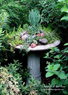 Fairy Garden In A Broken Or Cracked Fountain An Idea Worth Saving Flowers Gardening Succulents Barb Rosen S Succulent Filled Birdbath