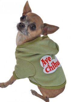 Need two for my Mexican Death Squad (Chihuahuas - Mango and Penelope)