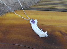 Skunk Jaw Bone Pendant, Amethyst dangle, Vulture Culture, Taxidermy Jewelry, Animal Bone, Boho, Bones, Burning Man,  Oddities & Curiosities by SagebrushandBeyond on Etsy