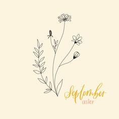 September birth flower, astrology - Gracewell Design Co.