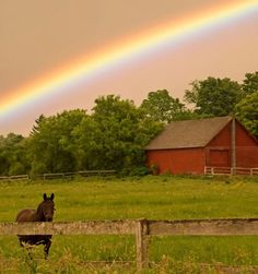 Beautiful pic of a barn with a rainbow and horse