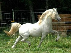 "Welsh Horse Breeds ....reminds me of our Welsh pony My sister and I had as children.....""Lightening"""