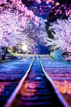 Sakura Line | Masato Mukoyama #Japan