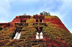 #HOTELS #SWD #GREEN2STAY Hotel Milano Scala L'autunno è la stagione in cui la natura si veste dei caldi colori della terra. Benvenuto autunno, che abbia inizio l'inno ai colori!  http://www.hotelmilanoscala.it/ Welcome autumn with your dazzling array of colours...