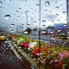 #botanical #air #sky #rain #rainy #polkadot #bloom #blossom #flower #landscape #雨 #水滴