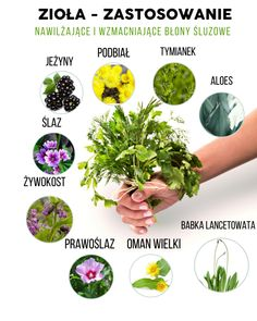 Healthy Food, Healthy Recipes, Herbs, Plants, Health Foods, Healthy Nutrition, Healthy Foods, Healthy Eating Recipes, Herb