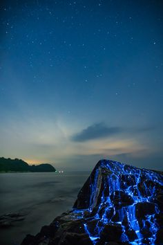 Blue Rivers of Bioluminescent Shrimp Trickle Down Oceanside Rocks in Okayama, Japan   Colossal
