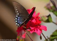 Today's Post from Imagery Photography...Flutterbye
