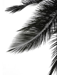 Palm tree poster. Mustavalkoinen. Palm Trees, Abstract, Artwork, Poster, Shopping, Palm Plants, Summary, Work Of Art, Auguste Rodin Artwork