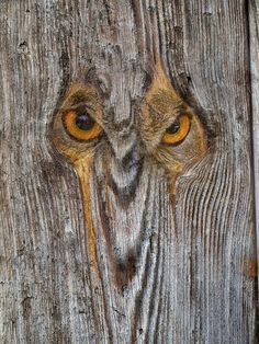 Metamorphosis I Owl - Tree Carving Painted Driftwood, Driftwood Crafts, Painted Wood, Arte Pallet, Wood Pallet Art, Tree Carving, Wood Carving Art, Owl Art, Land Art