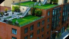 roof garden.jpg 640×360 píxeles