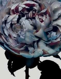 beautiful photography by Nick Knight featured in A Magazine curated by Martine Sitbon