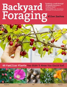 """""""65 familiar plants you didn't know you could eat."""" You will recognize dandelions, crab apples, and mulberries.  Others-- dahlias, daylilies and rugosa rose-- you may have thought were just decorative.  A nice little chapter covers mushrooms for the beginner forager. Not for the faint of heart or easily confused, but a handy little guide if you're lost in the woods (or experiencing a complete breakdown of the food growing and distribution system)…or maybe if you just have a taste for…"""