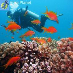 ¿No sabéis lo que hacer en Gisborne con Niños? No os preocupéis por que nosotros os ayudaremos. Os contaremos 6 cosas que hacer en Gisborne con niños. Desde bucear en el tour ecológico de arrecifes de Tatapouri hasta aprender un poco sobre la cultura maorí. Fishing Photography, Underwater Photography, Fly To Fiji, Fiji Beach, Scuba Diving Equipment, Blue Hole, Beste Hotels, Visit Egypt, Adventure Travel