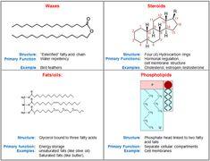 What Are Lipids?
