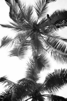 Palm trees, www.iamnaturalstore.com.au
