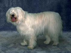 South Russian Owtcharka Russian Dog Breeds, Russian Dogs, Losing A Dog, Pets, Google Search, Animals, Pet Dogs, Animales, Animaux