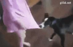 click on image to go to gif / CAT PROTECTS GIRL