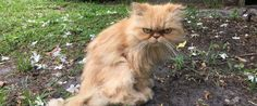 PHOTO: Homeless Grumpy Cat Adopted by Home Inspector