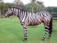 I think my mom should paint her horse like this for Halloween!  :)