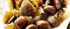 Le castagne sono un goloso e nutriente regalo dell'autunno. La castagna è ricca di carboidrati e per il dr. Mozzi è un ottimo sostituto del pane e della pasta.