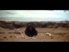 "▶ Classic Scene of the Movie ""2001 A Space Odyssey"" - YouTube"