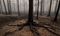 Burnt Russian forest after 2010 fires