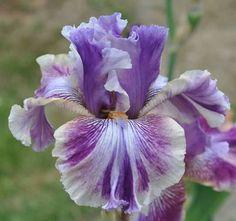 """#Iris """"Die Laughing""""    http://dennisharper.lnf.com/"""