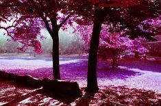 lomography lomochrome color negative kodak aerochrome infrared ir 35mm 120 film stock celluloid 2