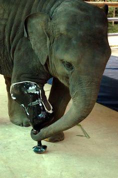 Motala At Fae Elephant Sculpture Elephant Parade Save The Elephants Asian Elephant