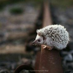 Image in picture collection by DiCold on We Heart It Picture Collection, Brown And Grey, Find Image, We Heart It, Hedgehogs, Pictures, Animals, Colors, Photos