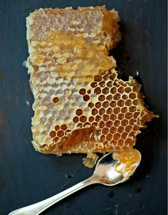 honeycomb ~ We could have our own bee hives. An endless supply of honey from our own area.