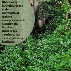 Ortiga La Mala Hierba Fuente de Salud – Club Salud Natural