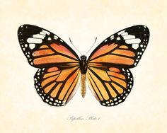 Vintage Butterfly Series 2 Papillon Plate 1 Art Print 8x10 Natural History Home Decor. $10.00, via Etsy.