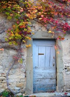 Coloured vines and old wooden doors. Old Door by.