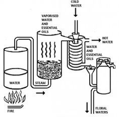 How to Make Essential Oils: Making Essential Oils – Steam Distillation, and Absolutes ~ a GREAT site to show the distillation process. Using a canner pot, you can do the same process!