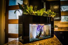 AquaSprouts's Stylish Aquaponic Garden Lets You Grow Fresh Veggies on Your Kitchen Counter | Inhabitat - Sustainable Design Innovation, Eco Architecture, Green Building