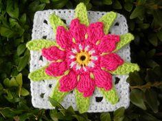cactus flower square