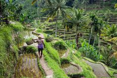 (Moment RF) Bali in Indonesia offers jungles, temples and incredible beaches: 6. Tegallalang Rice Terraces (You can learn a lot about Bali's rich history and culture during a tour of these traditional rice paddies, which use 'Subak', an ancient irrigation system said to be passed down from the eighth century. Art fans will also want to check out the nearby art kiosks and cafés where you can see and buy artwork from locals.)