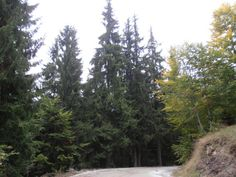 Alatia Forest, Drama