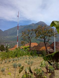 The Volcano Merapi from our garden in Selo Central Java