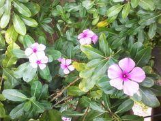 Flores, Salvador/Bahia/Brasil