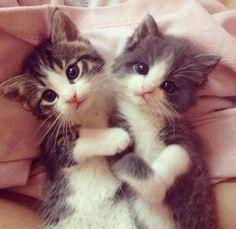 Precious little kittens