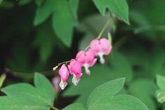22 Best Deer-Resistant Perennial Plants Sun Plants, Cool Plants, Flowers That Attract Hummingbirds, Attracting Hummingbirds, Bog Garden, Garden Tips, Garden Ideas, Garden Plants, Deer Resistant Perennials